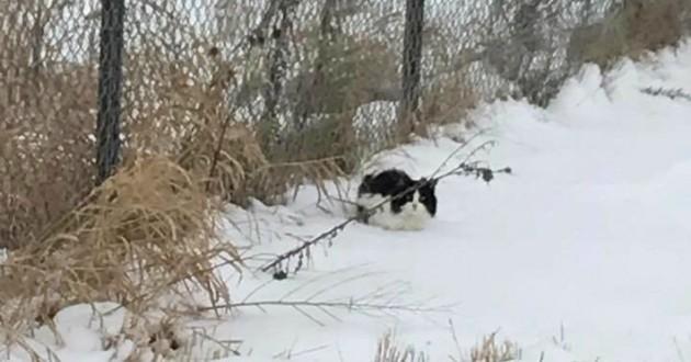chat dans la neige