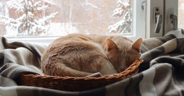 un chat près d'une fenêtre avec de la neige