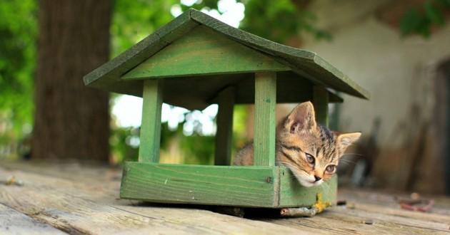 chat maison abri