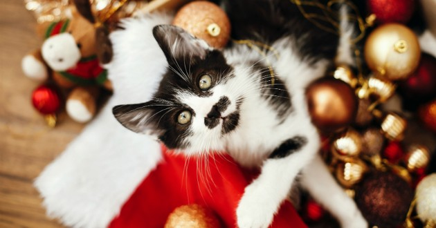 chat cadeau noel