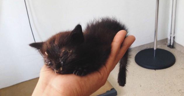 chat noir sauvetage