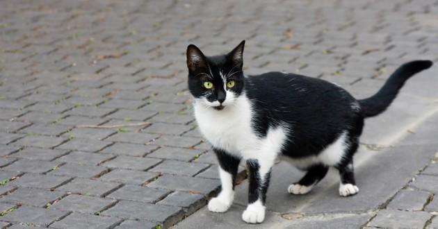 chat noir blanc rue