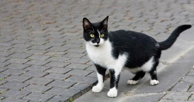 chat perdu noir blanc