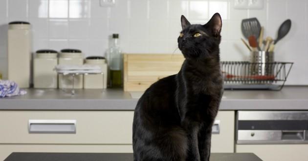 chat noir cuisine