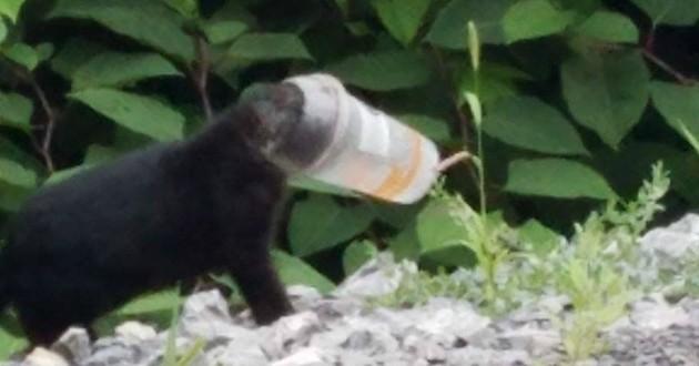 chat noir gobelet
