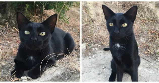 chat noir réglisse