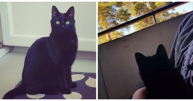 chat noir balcon
