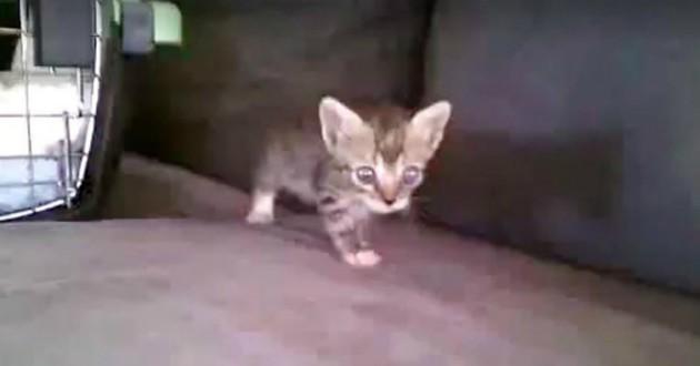 chat petit noyade