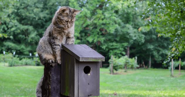 Chat assis sur une cabane à oiseaux