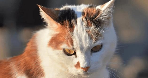 À Caen, un malade de Parkinson jugé irresponsable après avoir torturé des chats