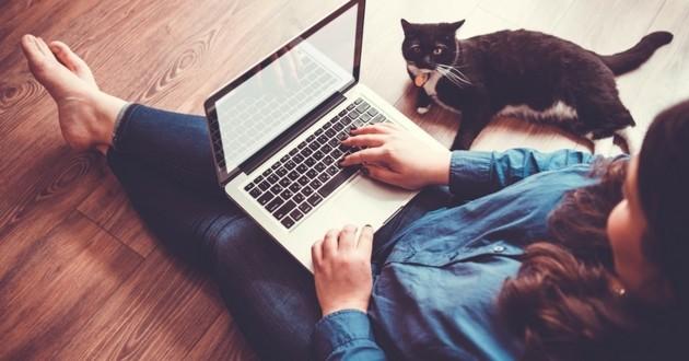 chat ordinateur petites annonces
