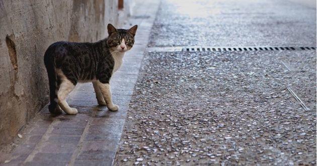 un chat perdu dans la rue