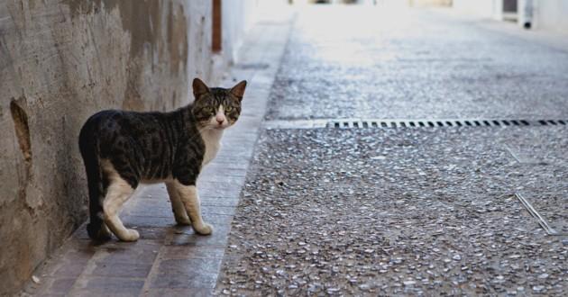 chat errant rue