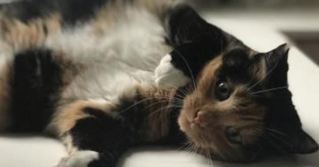 Villeneuve-d'Ascq : Scarlett, une chatte perdue depuis un vol de voiture