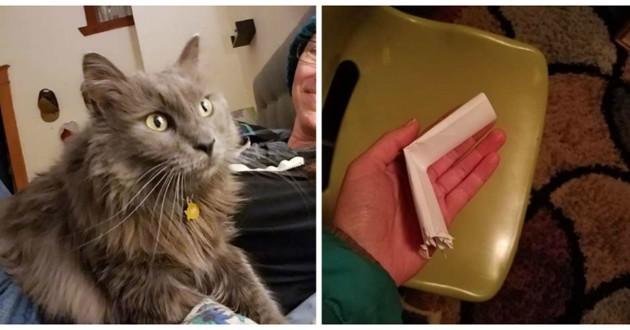 magnifique chat poils longs