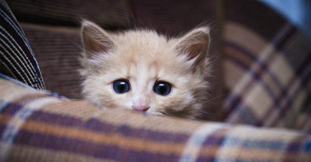 chat chien feu d'artifice