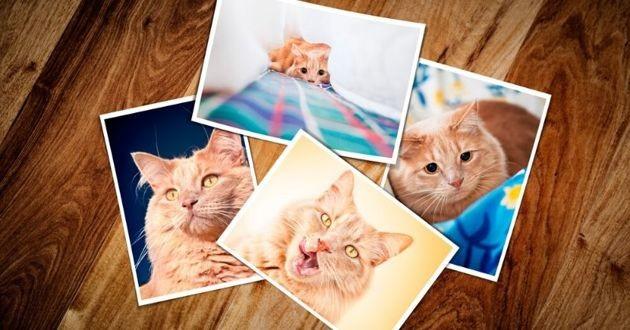 photos de chat roux