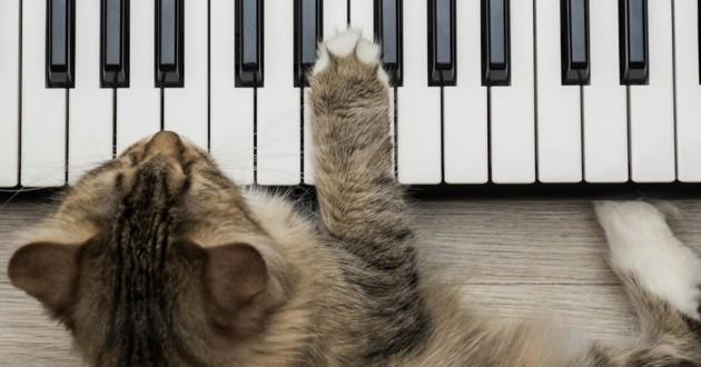 Les effets bénéfiques de la musique sur votre animal de compagnie