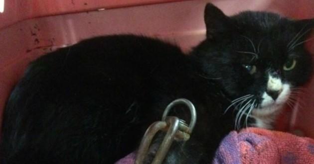 chat noir piège