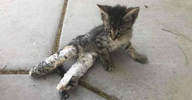 Chat dans un platre