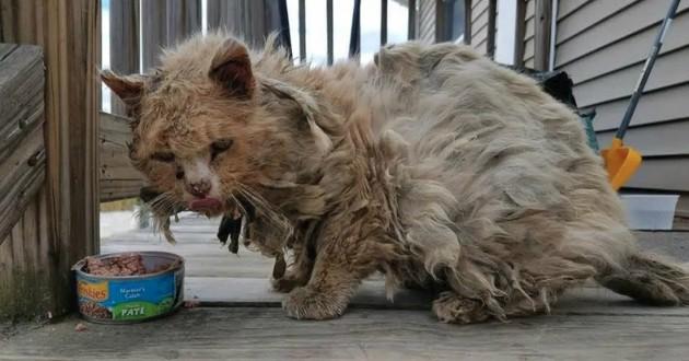 chat poils emmelés