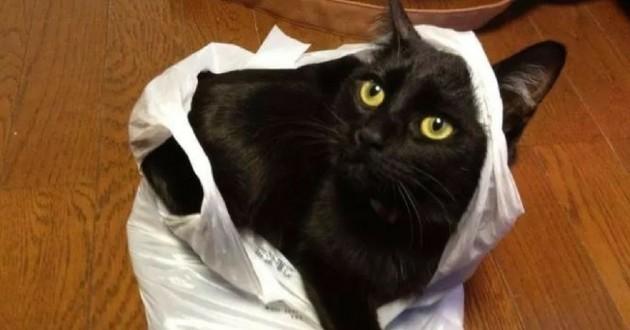 chat sac vol poisson