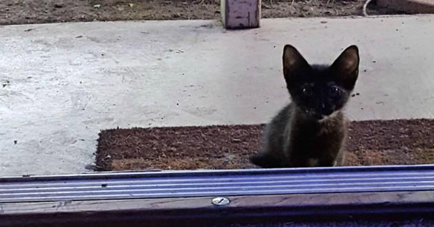 chaton abandonné