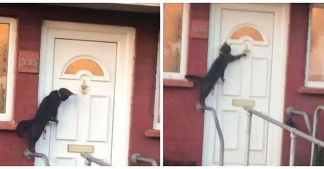 chat qui frappe à la porte