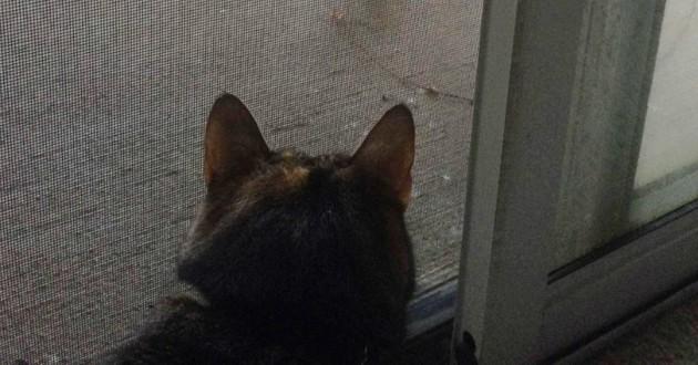 chat devant porte