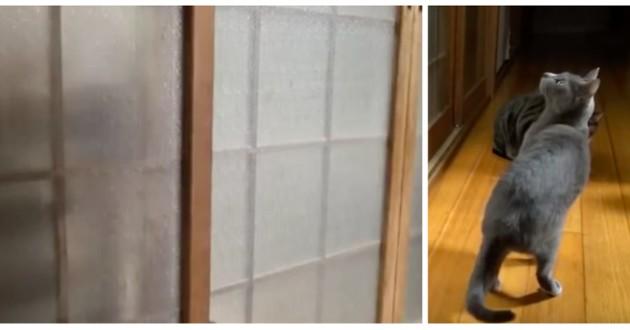 chat portes