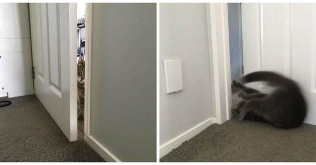 chat porte fermée
