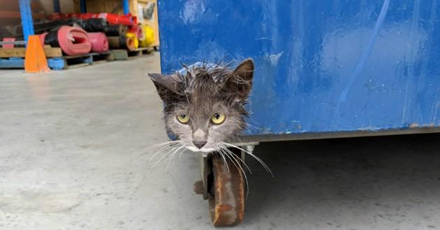 chat coincé poubelle