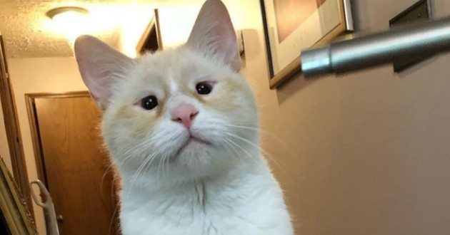 chat problème yeux