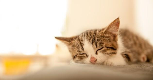 chat qui dort dans un placard