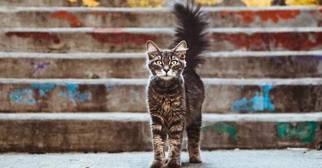 chat queue gonflée