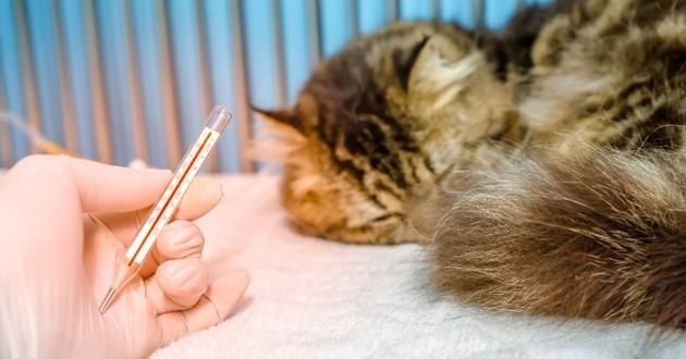chat qui a de la fièvre