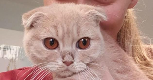 Très beau chat aux yeux magnifiques