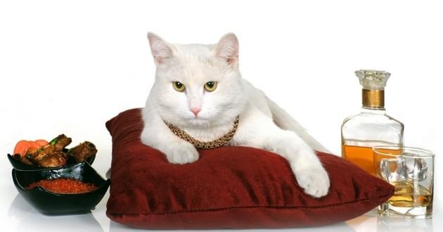 chat héritier