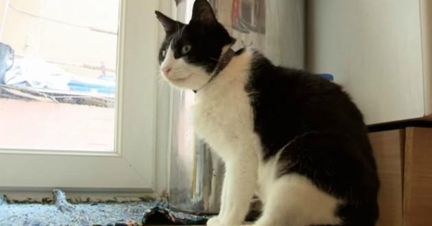 chat noir blanc