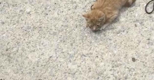 chat sur la route