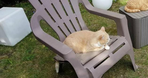 jardin chat roux