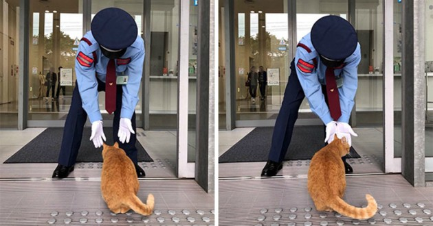 chat roux japon musée
