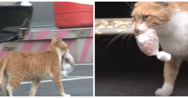 chat roux nourriture