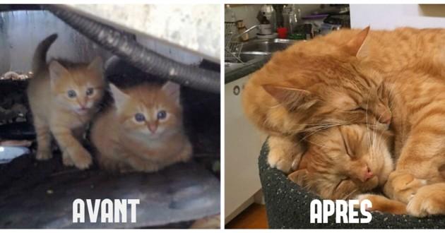 chatons roux sauvés