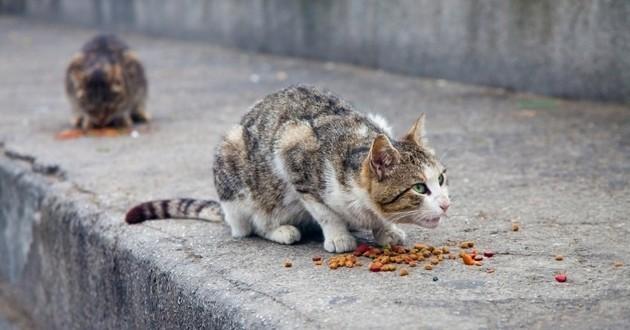 chat errant mange rue