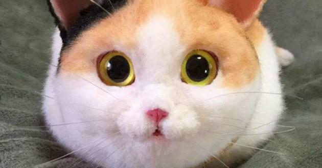 Sac en forme de chat