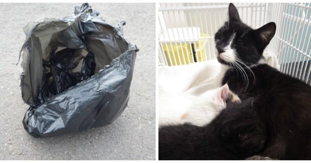 chat sac poubelle