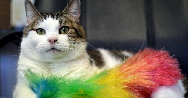 chat donneur de sang