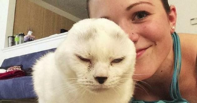 otitis chat sans oreilles