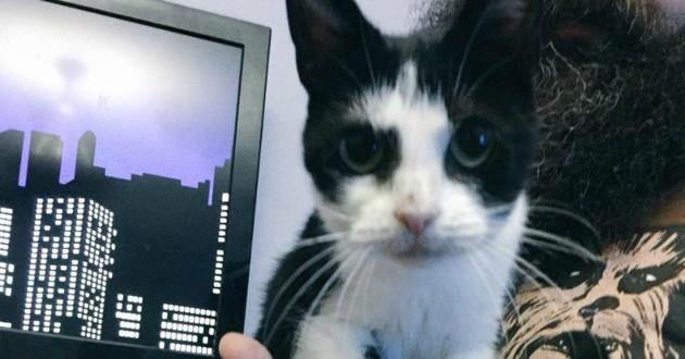 minuscule chat 13 ans